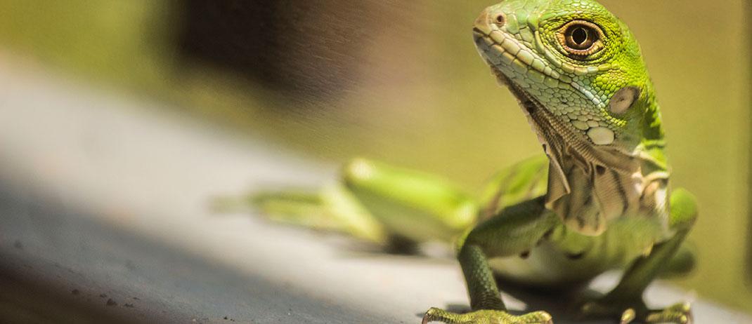 banner-reptil